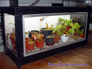 plantes carnivores culture en terrarium. Black Bedroom Furniture Sets. Home Design Ideas